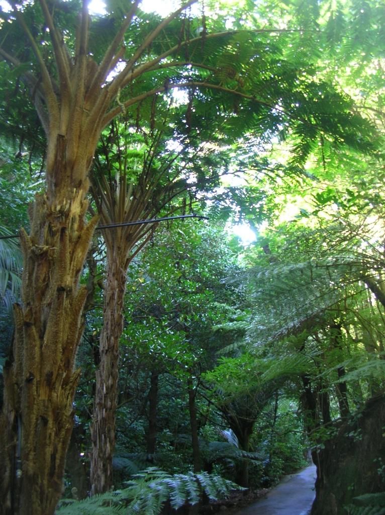 Farne im Botanischen Garten.
