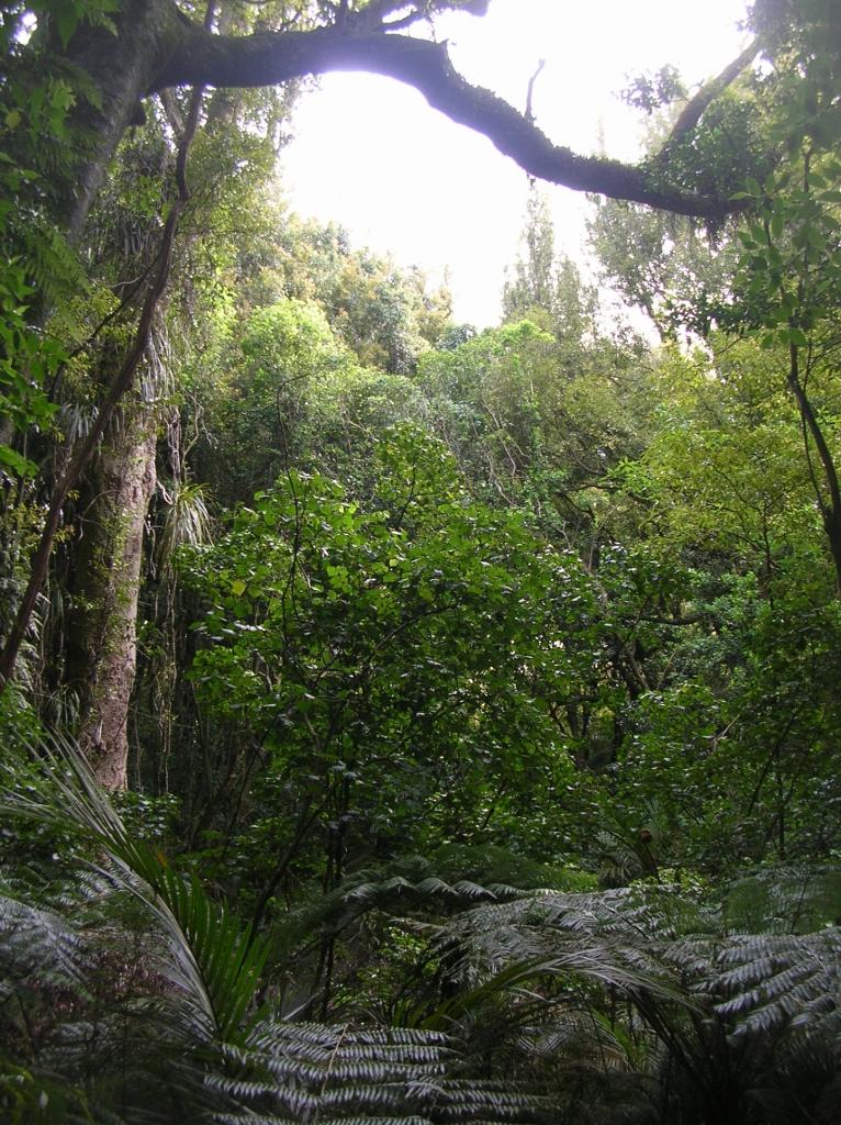 Bäume und Farne am Gorge-Track.